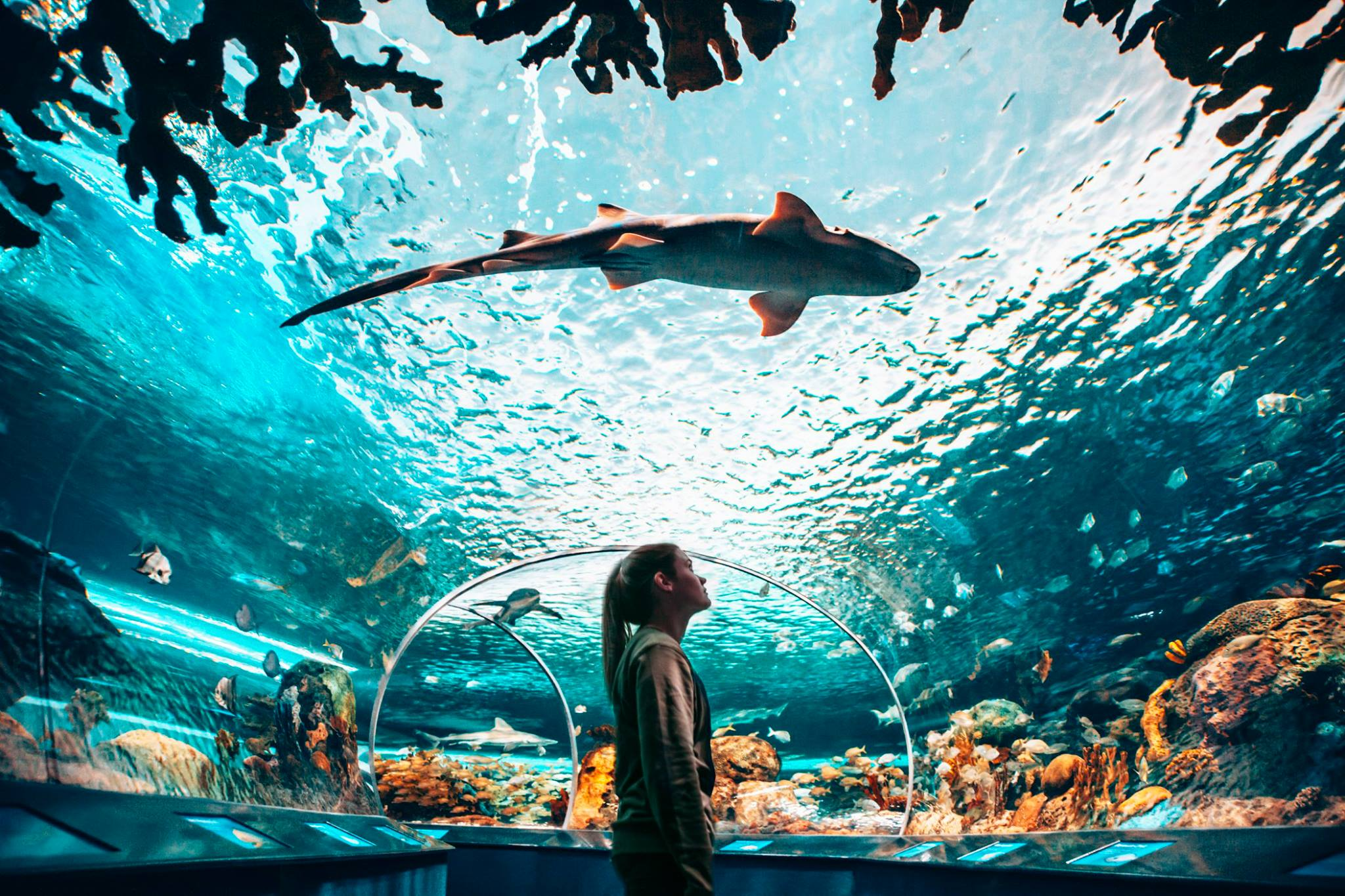 woman in the Ripley's Aquarium of Canada looking up at a shark